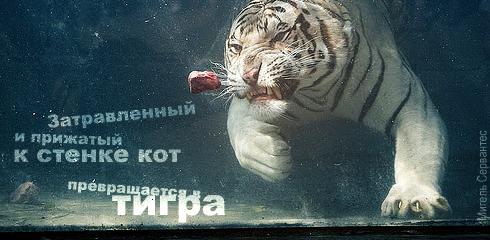 http://tazovildar.narod.ru/aforizm/aforizm047.jpg