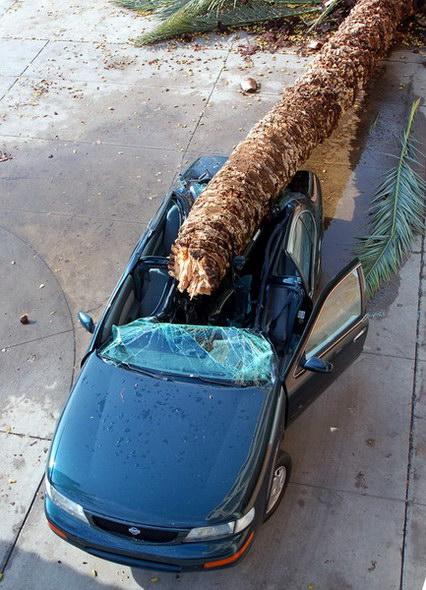 Фото приколы не повезло авто пальма
